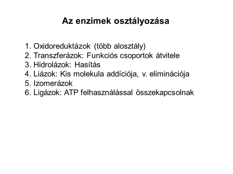 Az enzimek osztályozása