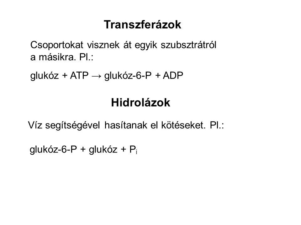 Transzferázok Hidrolázok Csoportokat visznek át egyik szubsztrátról