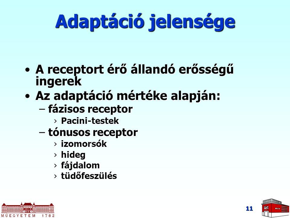 Adaptáció jelensége A receptort érő állandó erősségű ingerek