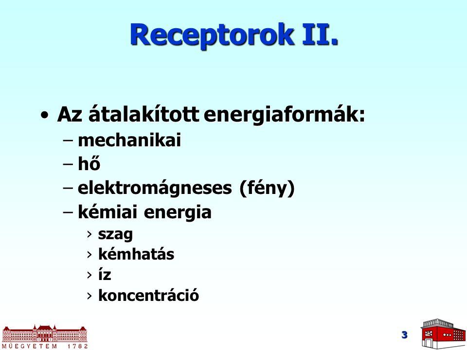 Receptorok II. Az átalakított energiaformák: mechanikai hő