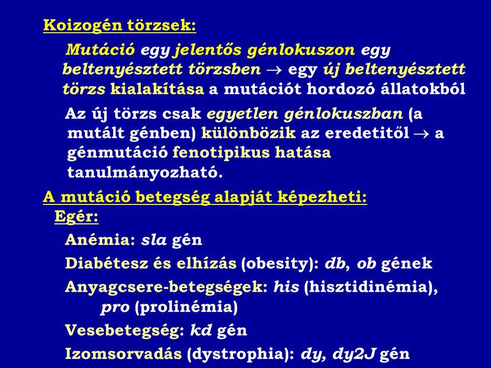 Koizogén törzsek: