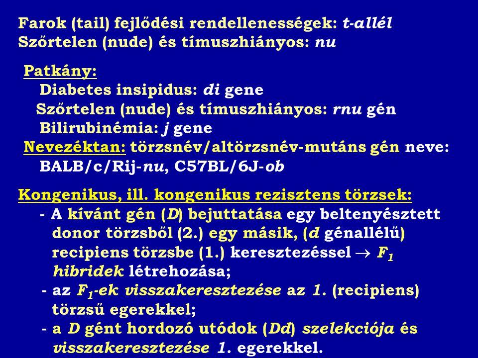 Farok (tail) fejlődési rendellenességek: t-allél