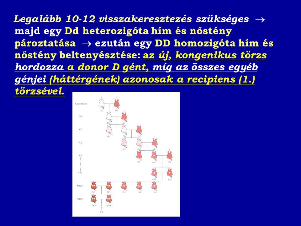 Legalább 10-12 visszakeresztezés szükséges  majd egy Dd heterozigóta hím és nőstény pároztatása  ezután egy DD homozigóta hím és nőstény beltenyésztése: az új, kongenikus törzs hordozza a donor D gént, míg az összes egyéb génjei (háttérgének) azonosak a recipiens (1.) törzsével.