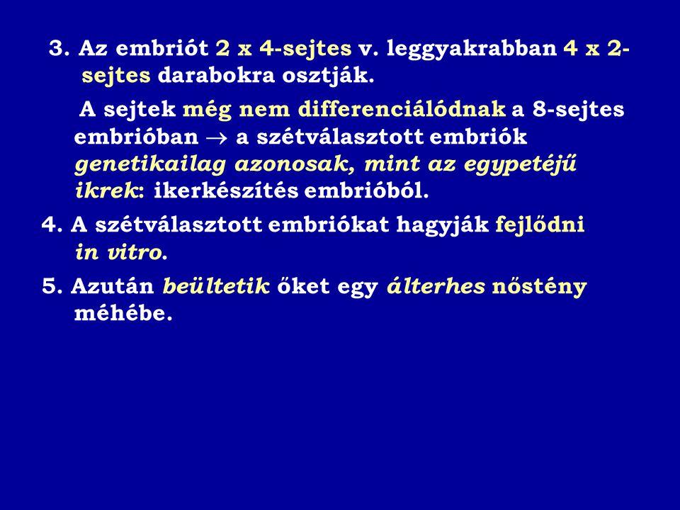 3. Az embriót 2 x 4-sejtes v. leggyakrabban 4 x 2- sejtes darabokra osztják.