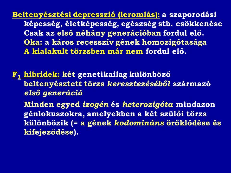 Beltenyésztési depresszió (leromlás): a szaporodási képesség, életképesség, egészség stb. csökkenése Csak az első néhány generációban fordul elő.