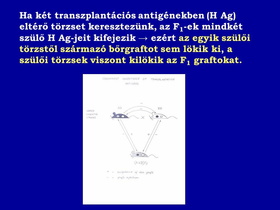 Ha két transzplantációs antigénekben (H Ag) eltérő törzset keresztezünk, az F1-ek mindkét szülő H Ag-jeit kifejezik → ezért az egyik szülői törzstől származó bőrgraftot sem lökik ki, a szülői törzsek viszont kilökik az F1 graftokat.
