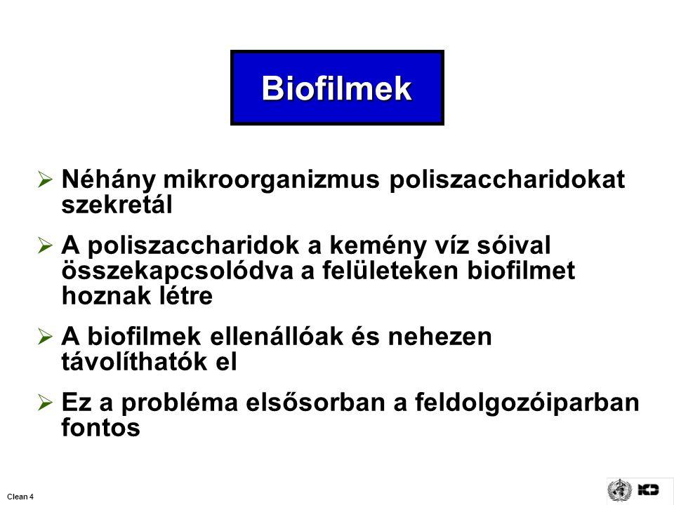 Biofilmek Néhány mikroorganizmus poliszaccharidokat szekretál