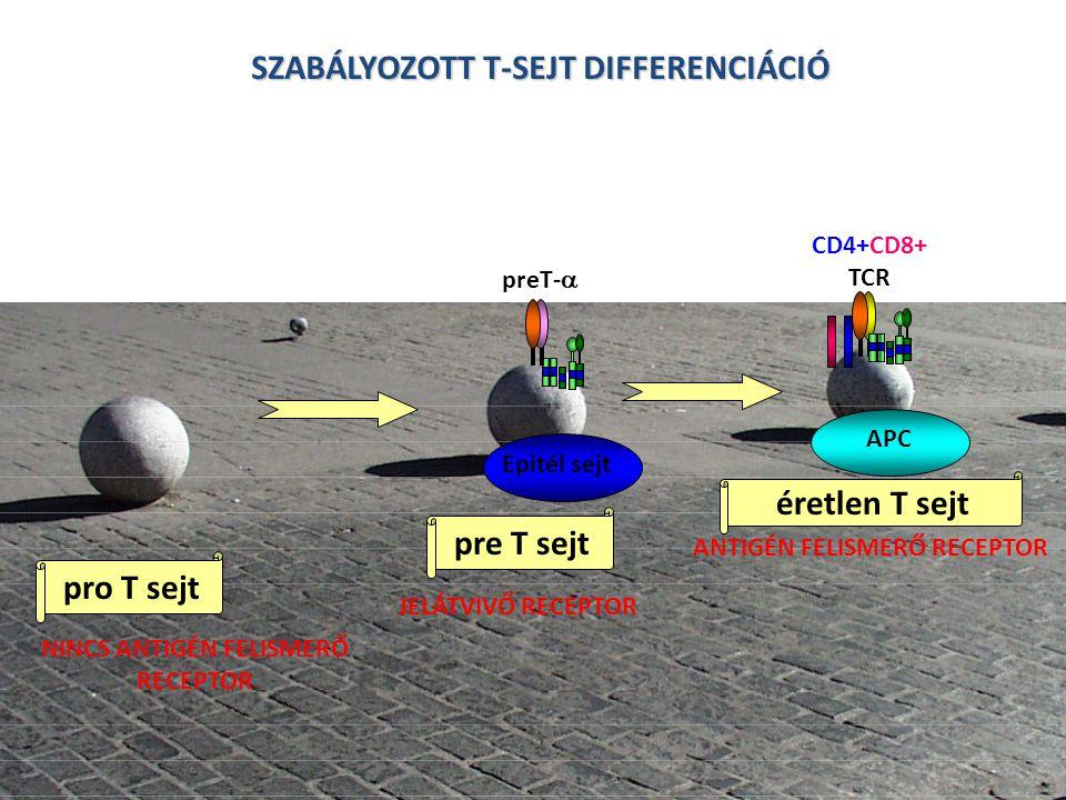 SZABÁLYOZOTT T-SEJT DIFFERENCIÁCIÓ
