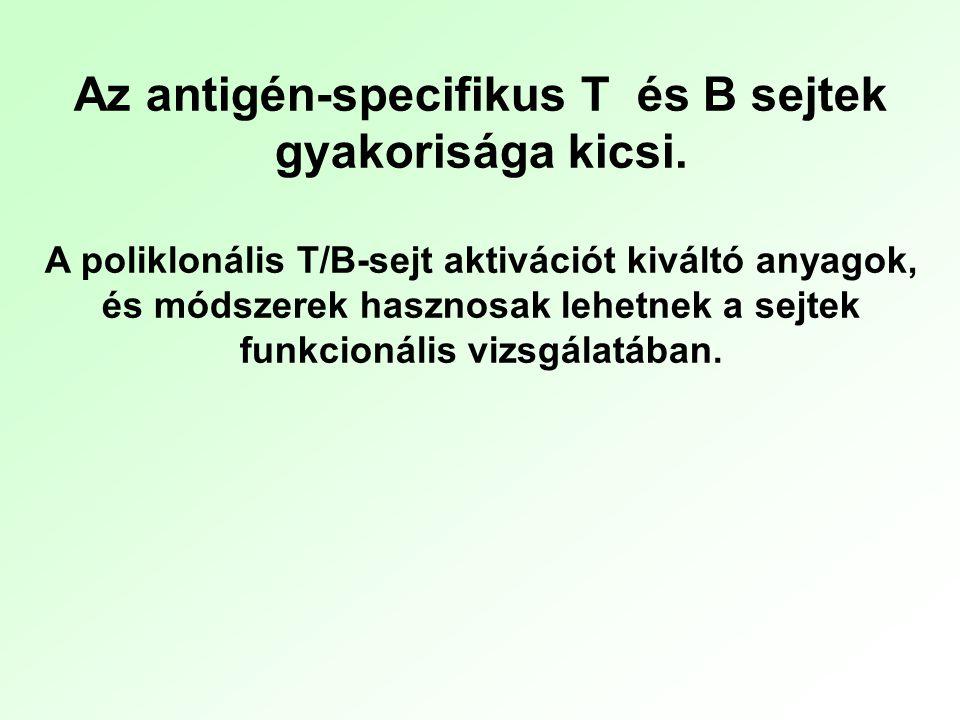 Az antigén-specifikus T és B sejtek gyakorisága kicsi.
