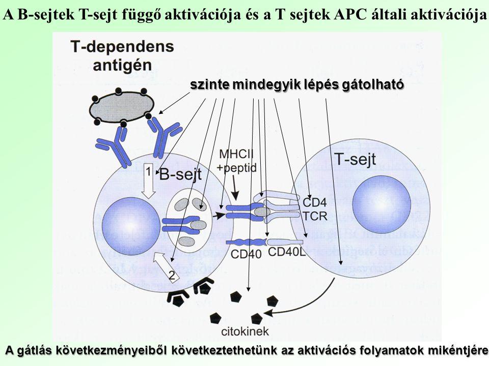 A B-sejtek T-sejt függő aktivációja és a T sejtek APC általi aktivációja
