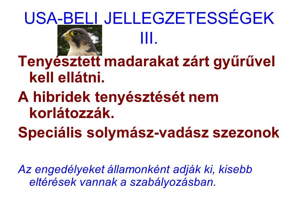 USA-BELI JELLEGZETESSÉGEK III.