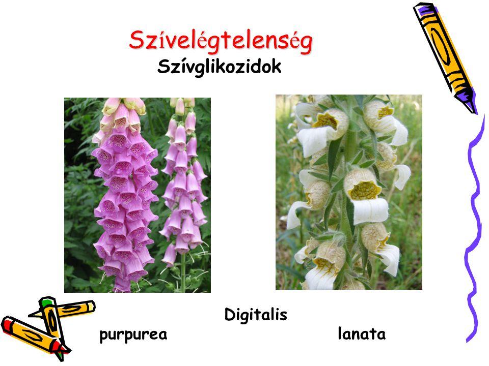 Szívelégtelenség Szívglikozidok Digitalis purpurea lanata