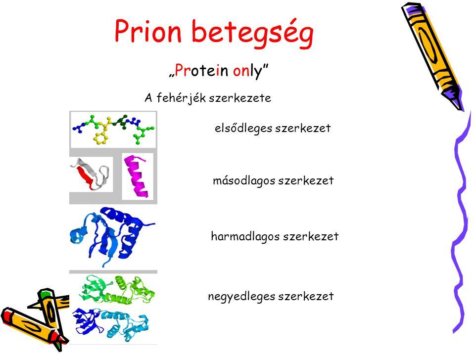"""Prion betegség """"Protein only A fehérjék szerkezete"""