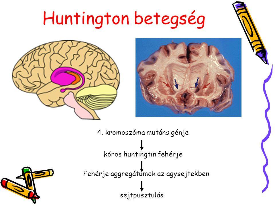 Huntington betegség 4. kromoszóma mutáns génje