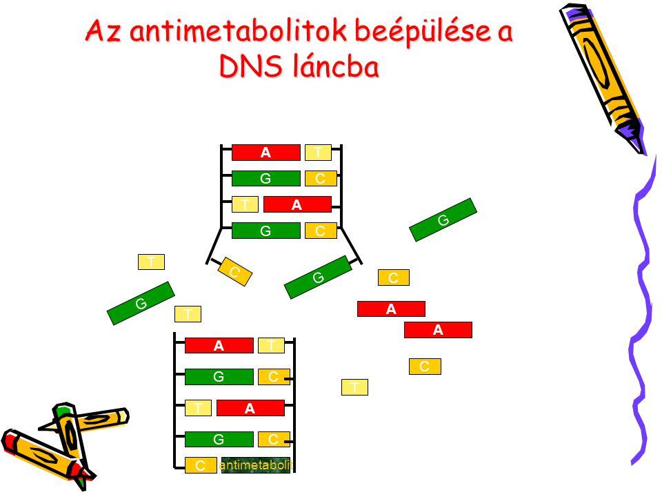 Az antimetabolitok beépülése a DNS láncba