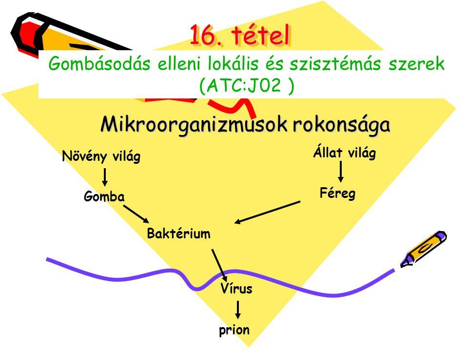 16. tétel Mikroorganizmusok rokonsága