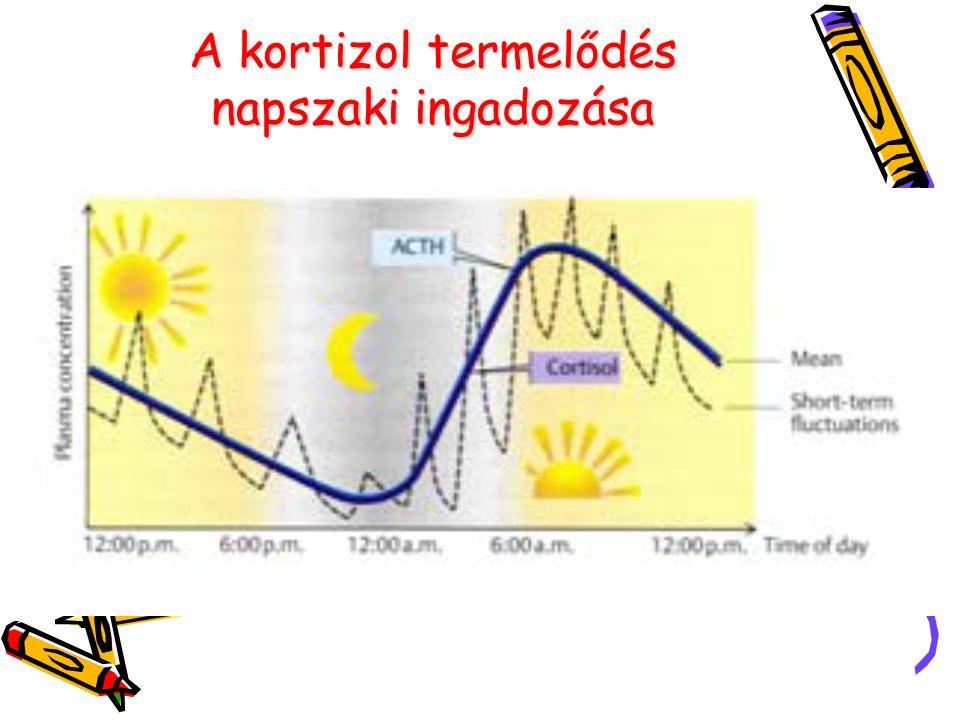 A kortizol termelődés napszaki ingadozása