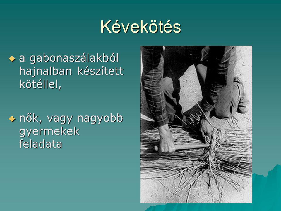 Kévekötés a gabonaszálakból hajnalban készített kötéllel,