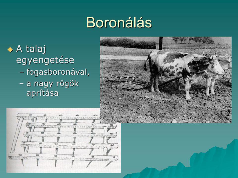 Boronálás A talaj egyengetése fogasboronával, a nagy rögök aprítása
