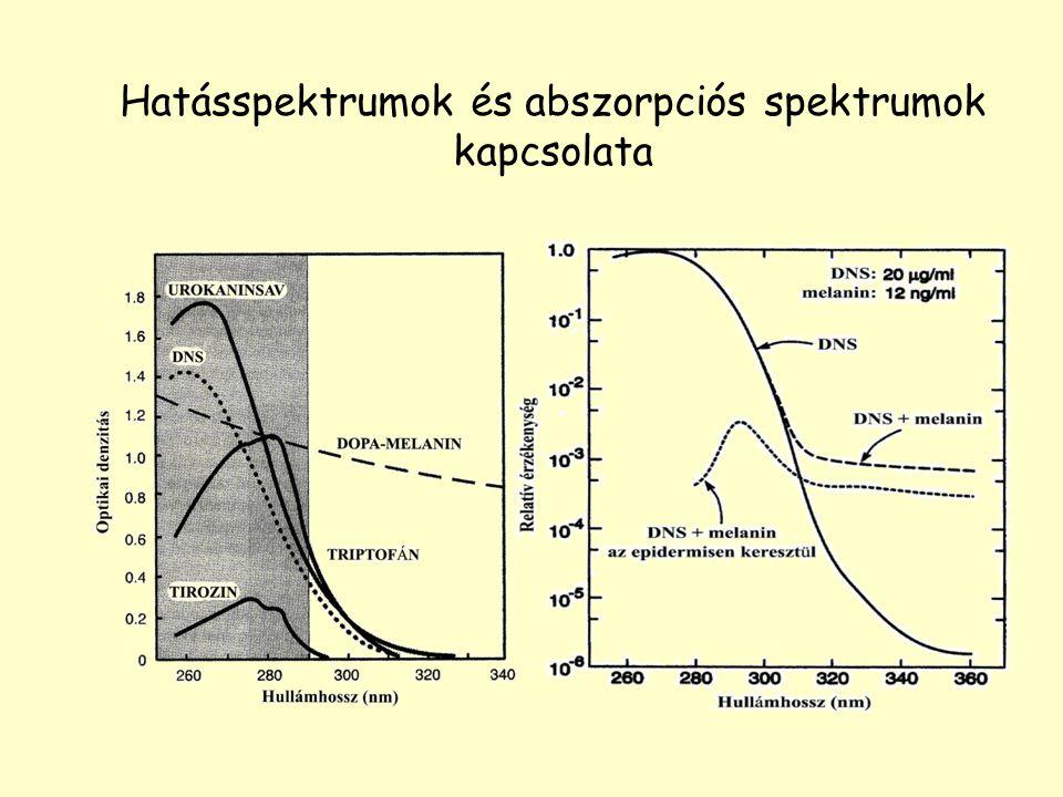 Hatásspektrumok és abszorpciós spektrumok