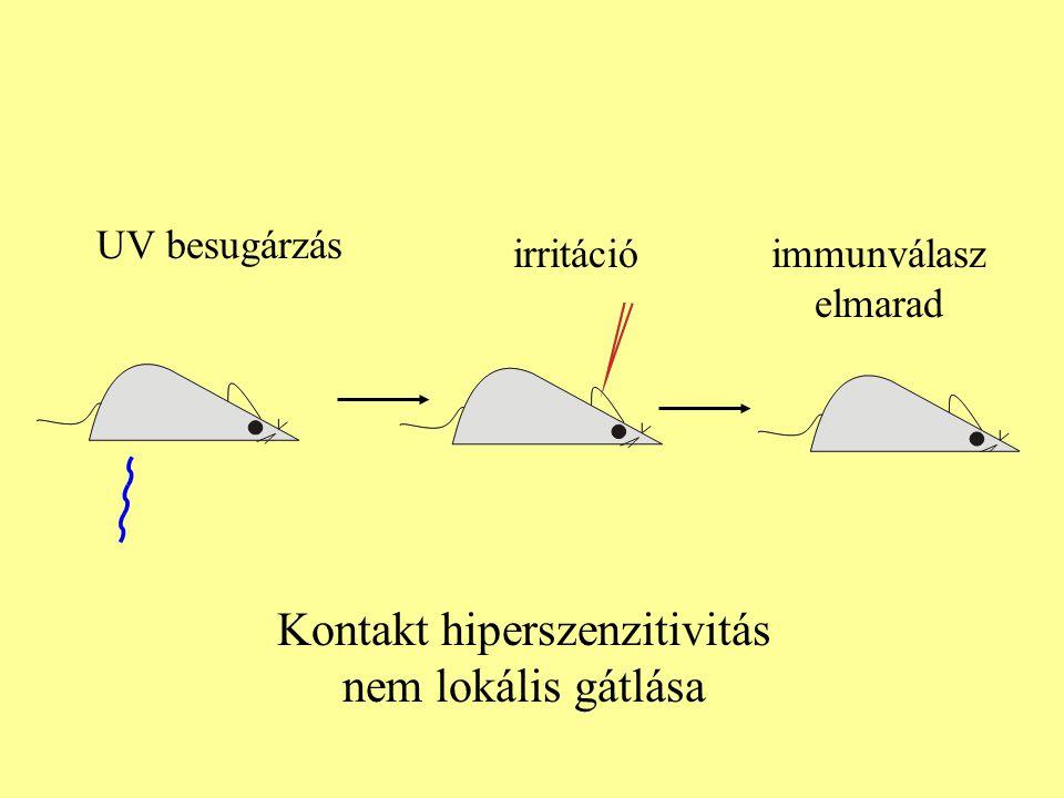 Kontakt hiperszenzitivitás