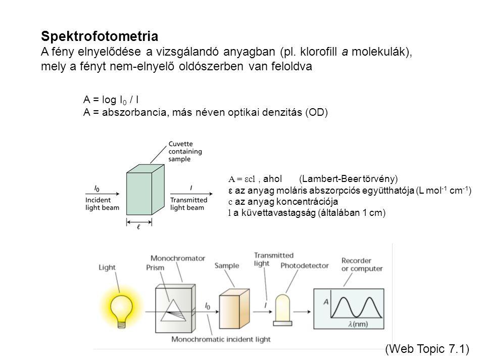 Spektrofotometria A fény elnyelődése a vizsgálandó anyagban (pl. klorofill a molekulák), mely a fényt nem-elnyelő oldószerben van feloldva.