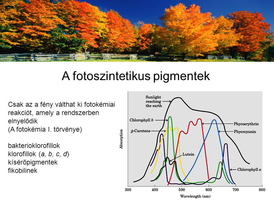 A fotoszintetikus pigmentek