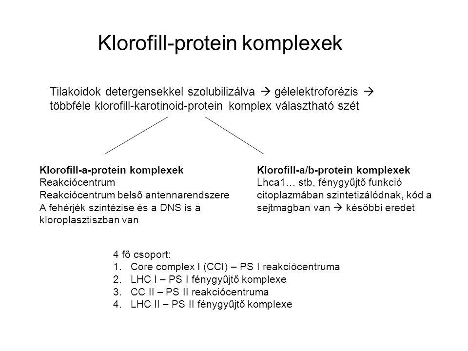 Klorofill-protein komplexek