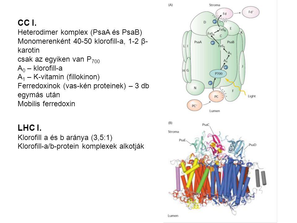 CC I. LHC I. Heterodimer komplex (PsaA és PsaB)