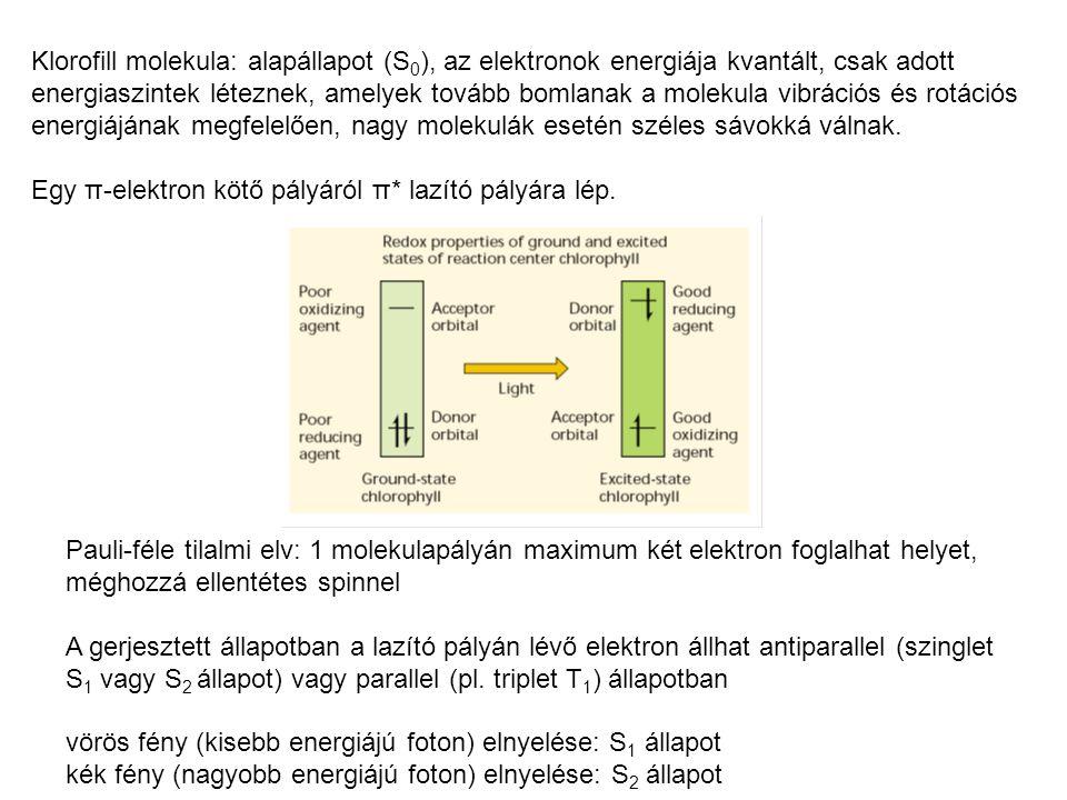 Klorofill molekula: alapállapot (S0), az elektronok energiája kvantált, csak adott energiaszintek léteznek, amelyek tovább bomlanak a molekula vibrációs és rotációs energiájának megfelelően, nagy molekulák esetén széles sávokká válnak.