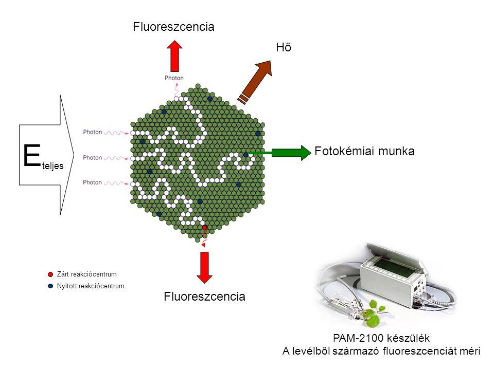 A levélből származó fluoreszcenciát méri