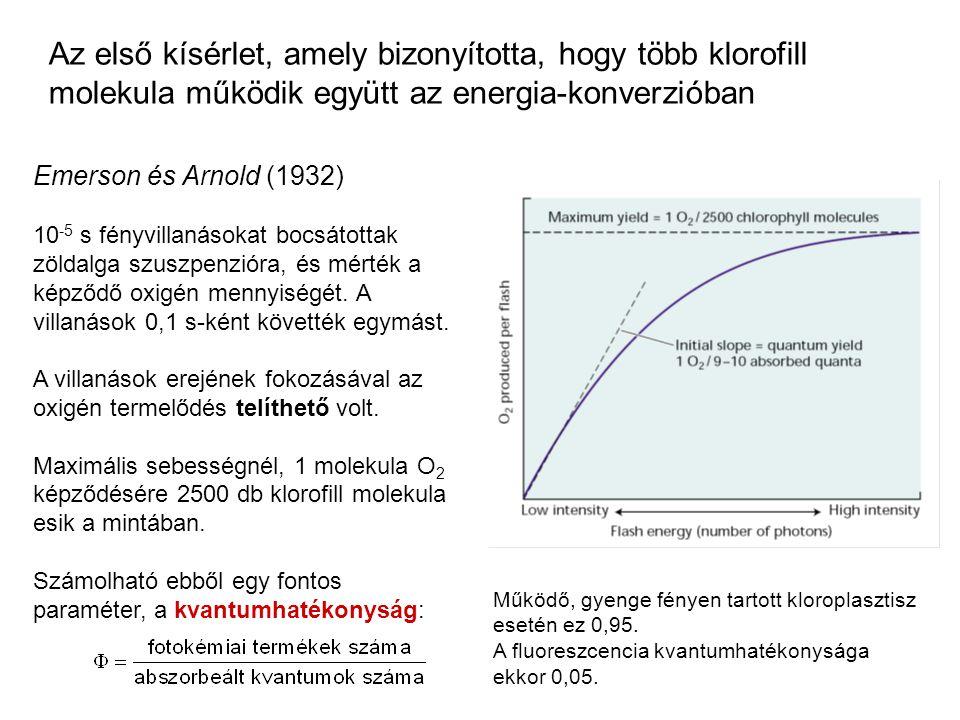 Az első kísérlet, amely bizonyította, hogy több klorofill molekula működik együtt az energia-konverzióban