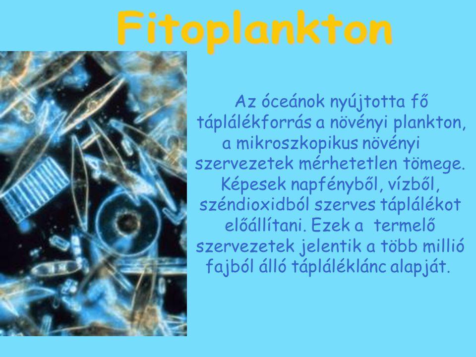 Fitoplankton Az óceánok nyújtotta fő