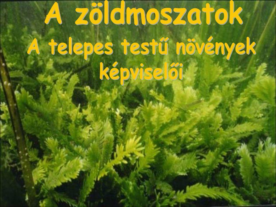 A telepes testű növények
