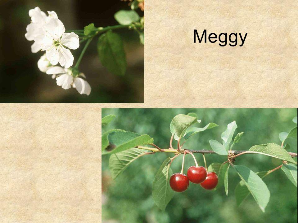 Meggy HERBÁRIUM – Magyarország növényei CD, Kossuth Kiadó