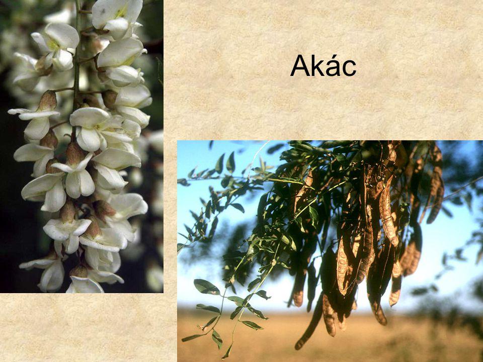 Akác Bal oldali kép: Hazánk növényvilága CD, Terra alapítvány