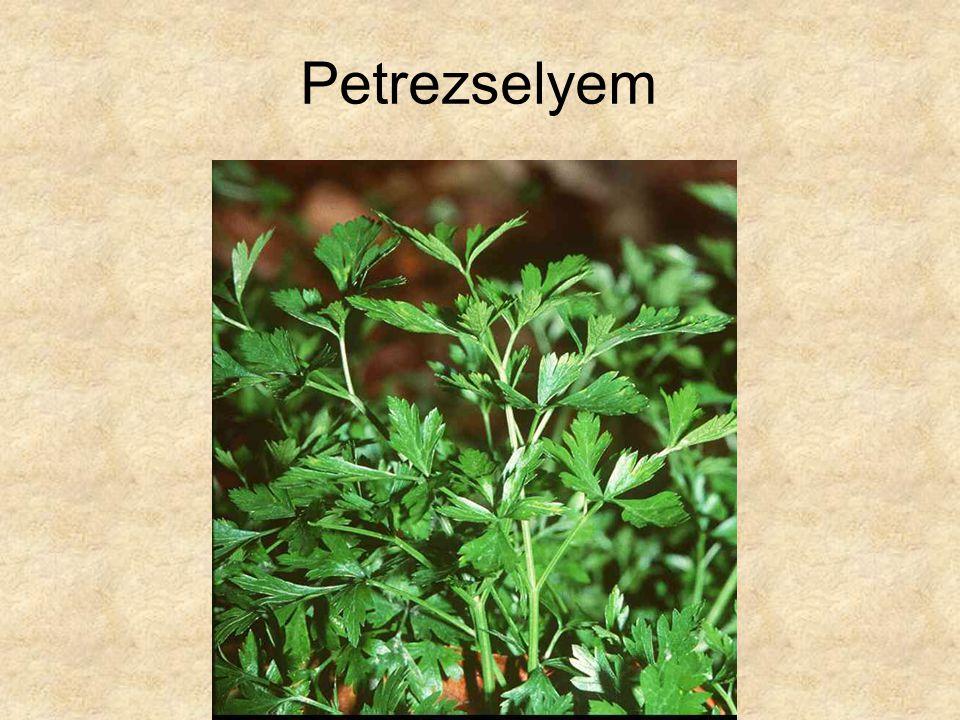 Petrezselyem HERBÁRIUM – Magyarország növényei CD, Kossuth Kiadó