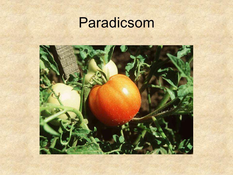 Paradicsom HERBÁRIUM – Magyarország növényei CD, Kossuth Kiadó