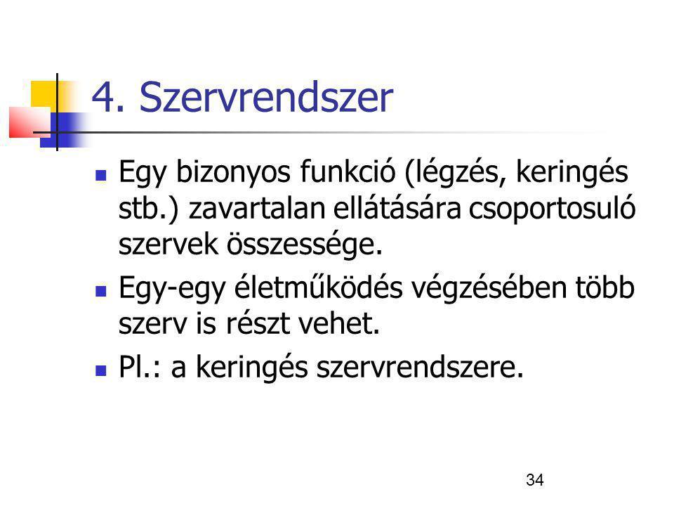 4. Szervrendszer Egy bizonyos funkció (légzés, keringés stb.) zavartalan ellátására csoportosuló szervek összessége.