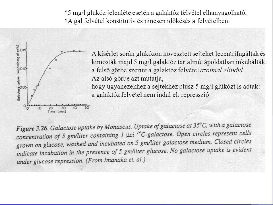 *5 mg/l glükóz jelenléte esetén a galaktóz felvétel elhanyagolható,