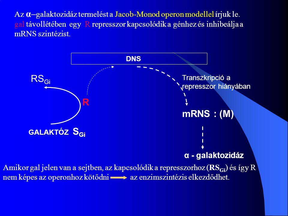 Az α–galaktozidáz termelést a Jacob-Monod operon modellel írjuk le