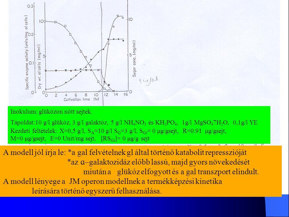*az ɑ–galaktozidáz előbb lassú, majd gyors növekedését