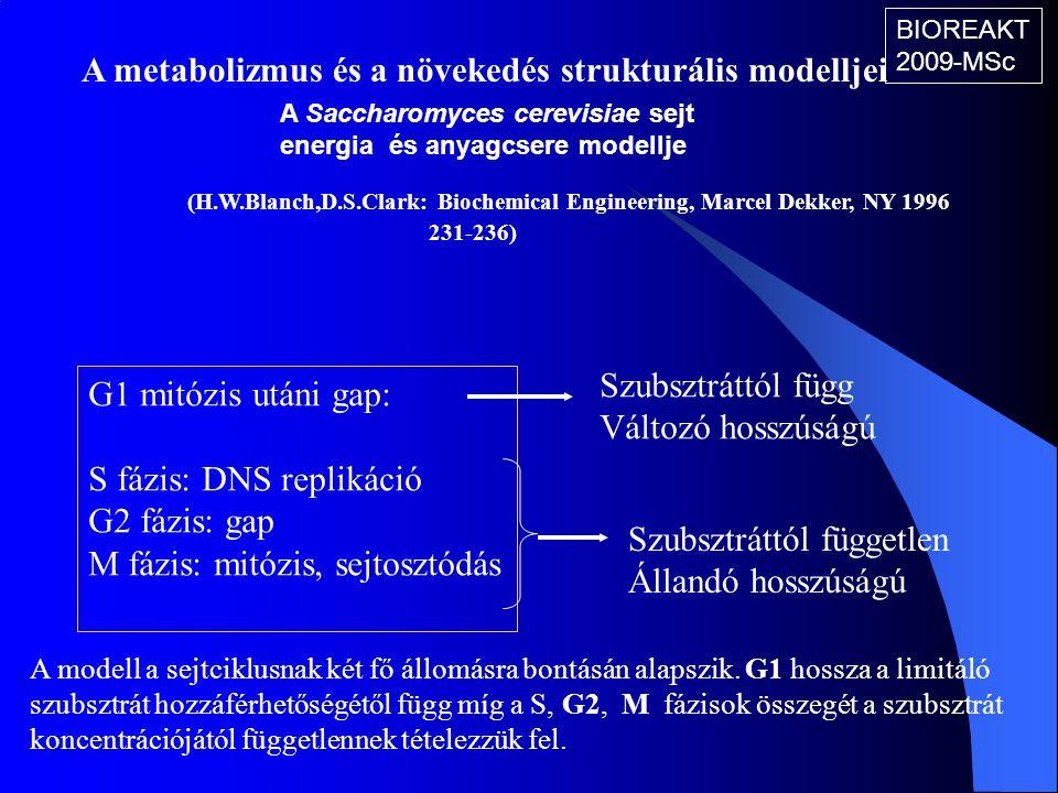 A metabolizmus és a növekedés strukturális modelljei