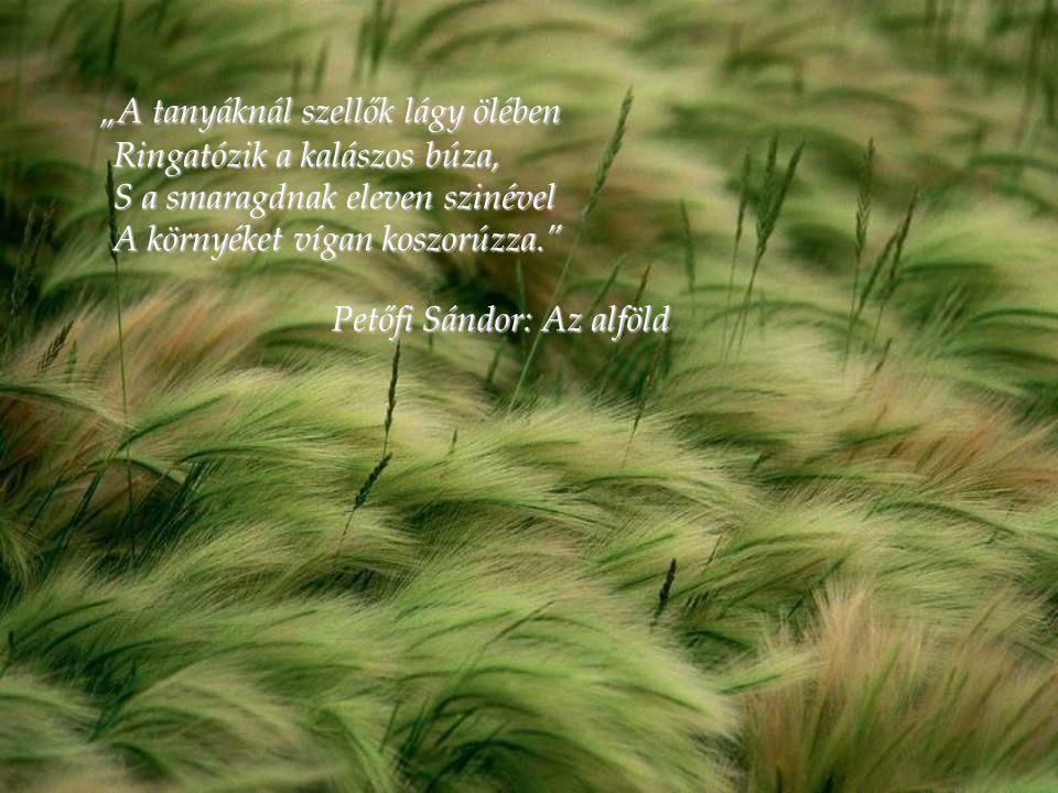 """""""A tanyáknál szellők lágy ölében Ringatózik a kalászos búza, S a smaragdnak eleven szinével A környéket vígan koszorúzza."""