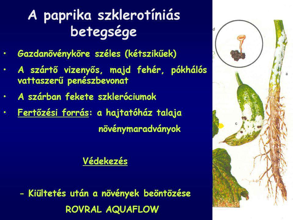 A paprika szklerotíniás betegsége