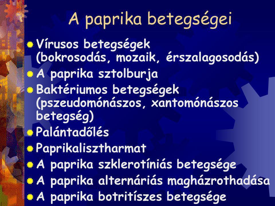 A paprika betegségei Vírusos betegségek (bokrosodás, mozaik, érszalagosodás)