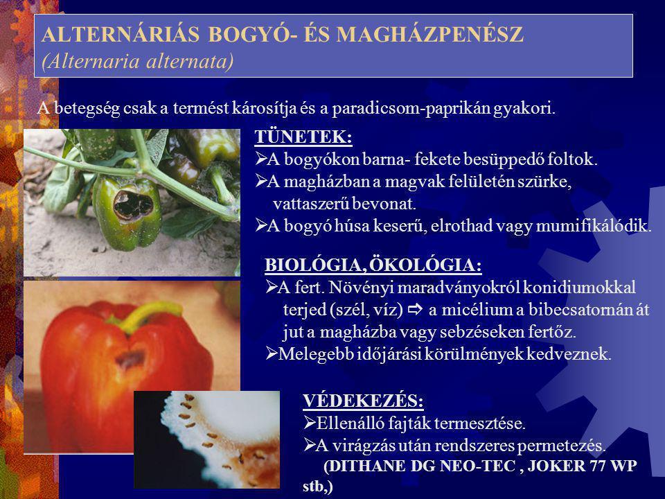 ALTERNÁRIÁS BOGYÓ- ÉS MAGHÁZPENÉSZ (Alternaria alternata)