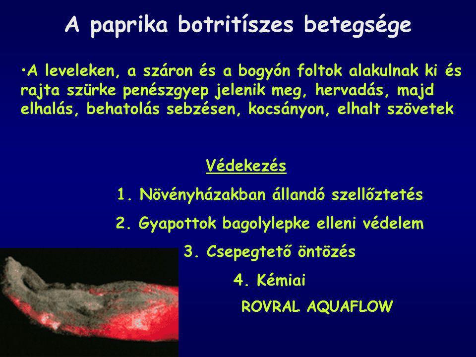 A paprika botritíszes betegsége