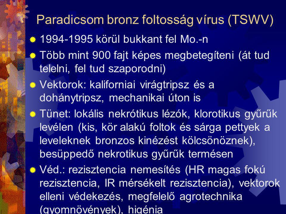 Paradicsom bronz foltosság vírus (TSWV)
