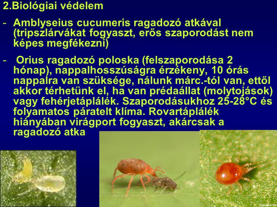 2.Biológiai védelem Amblyseius cucumeris ragadozó atkával (tripszlárvákat fogyaszt, erős szaporodást nem képes megfékezni)